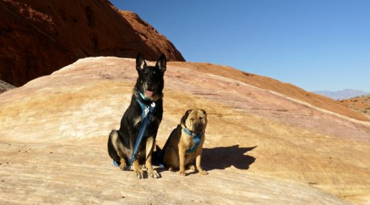 Buster and Ty at Valley of Fire State Park, NV