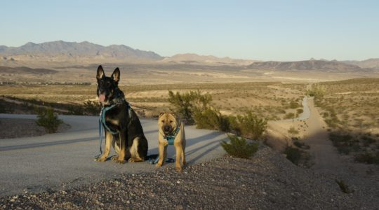 Buster and Ty - Lake Mead, NV
