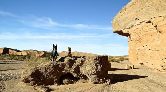 Buster and Ty at Gypsum Wash - Lake Mead, NV