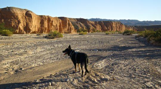 Buster at Gypsum Wash - Lake Mead, NV