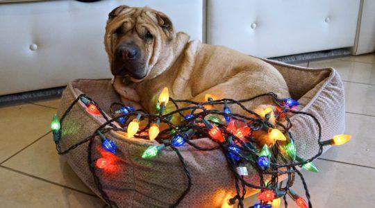 Untangling Christmas Lights