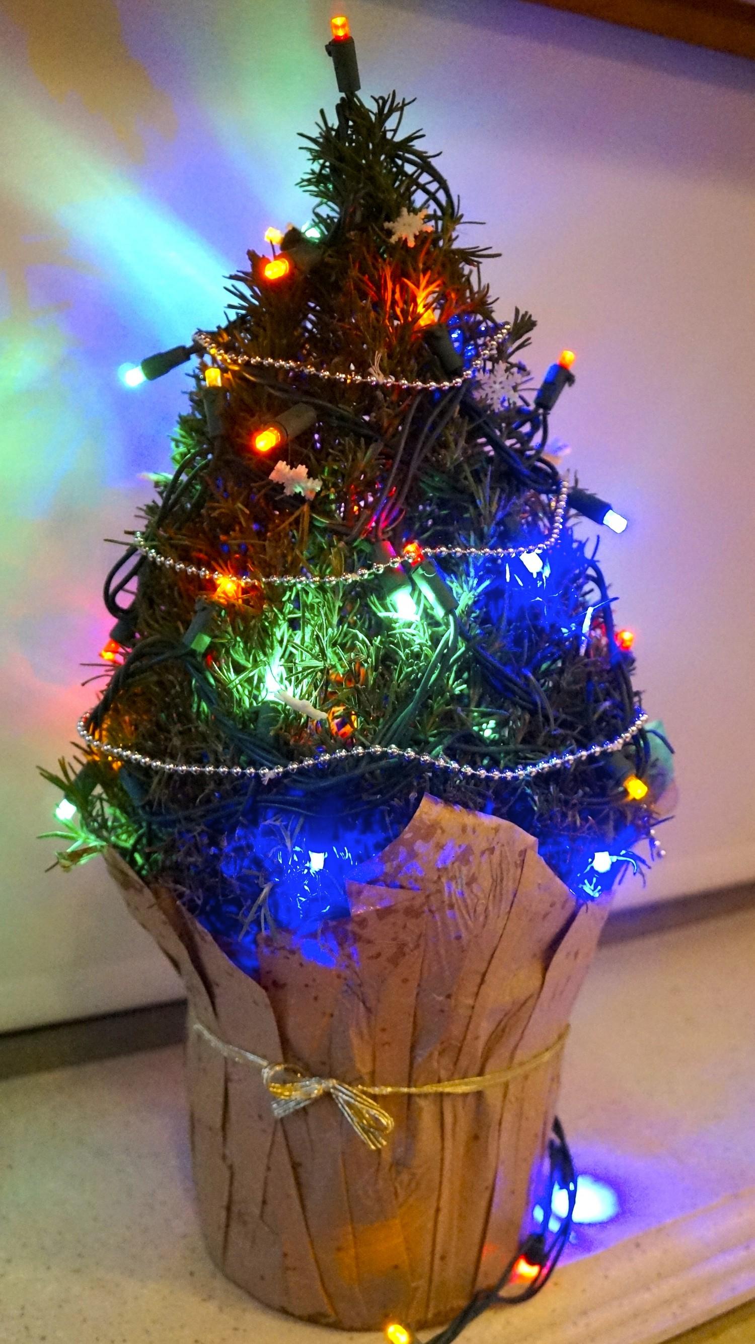 Rosemary Christmas Tree in the Motorhome