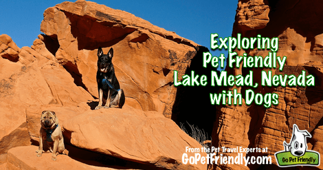 Sniffing Around Pet Friendly Lake Mead with Dogs