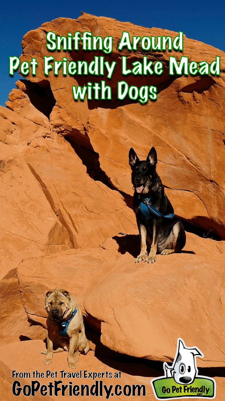 Exploring Pet Friendly Lake Mead with Dogs from the Pet Travel Experts at GoPetFriendly.com