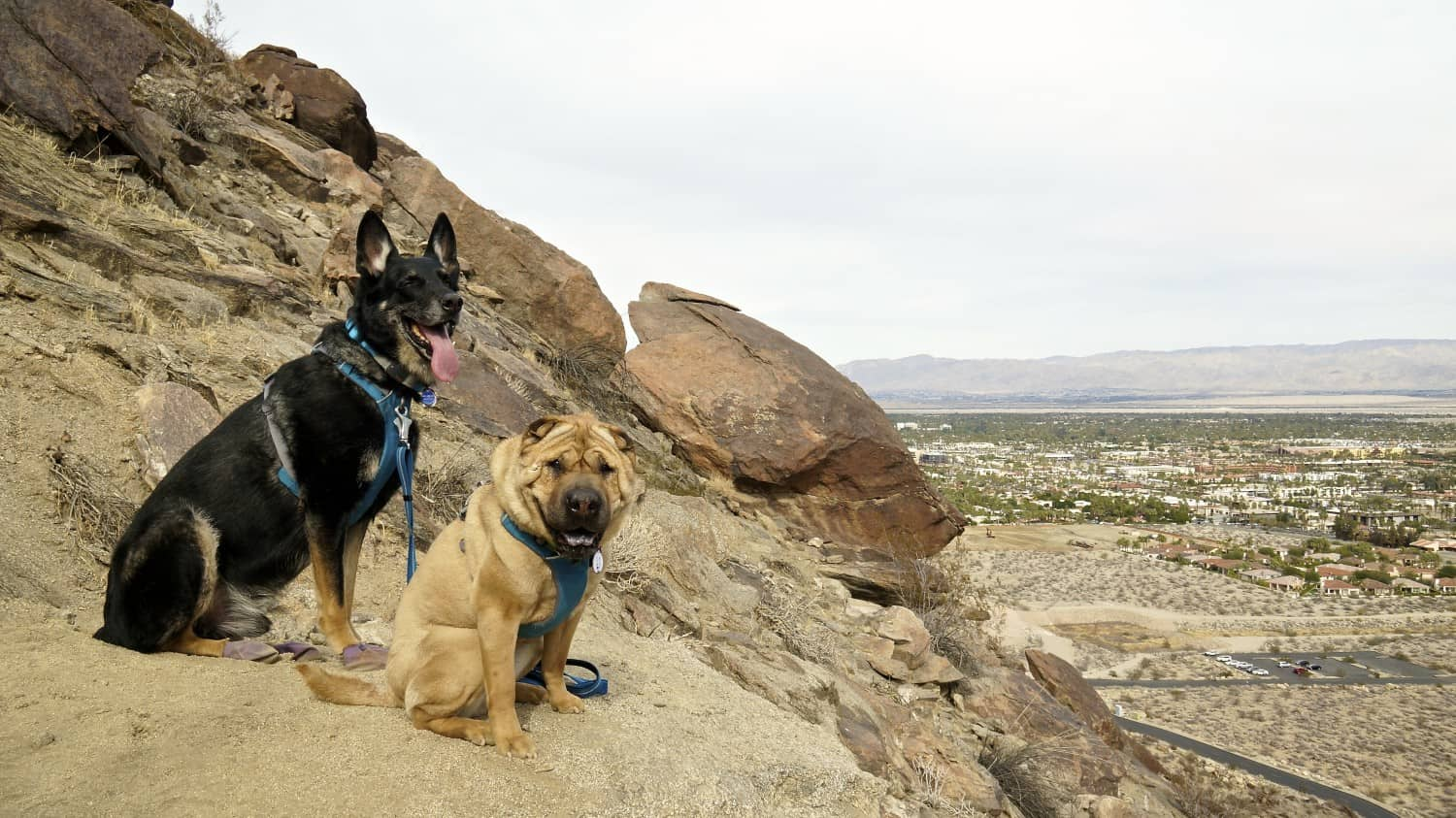 Buster and Ty, GoPetFriendly.com dogs on the pet-friendly South Lykken Trail in Palm Springs, CA
