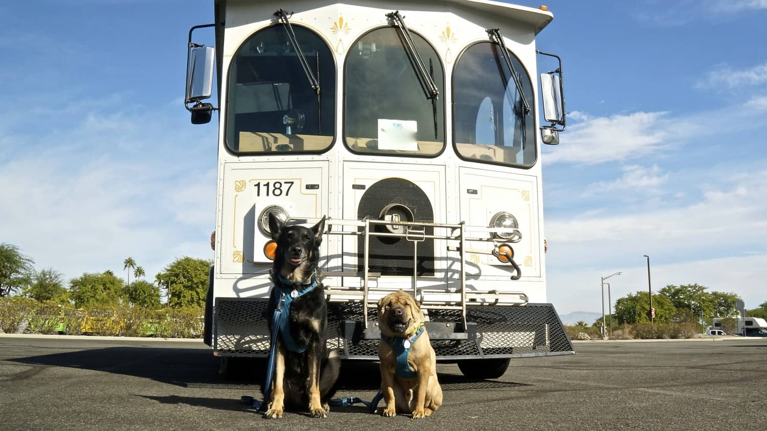 Buster and Ty, GoPetFriendly.com dogs, posing in front of a pet-friendly Buzz trolley in Palm Springs, CA