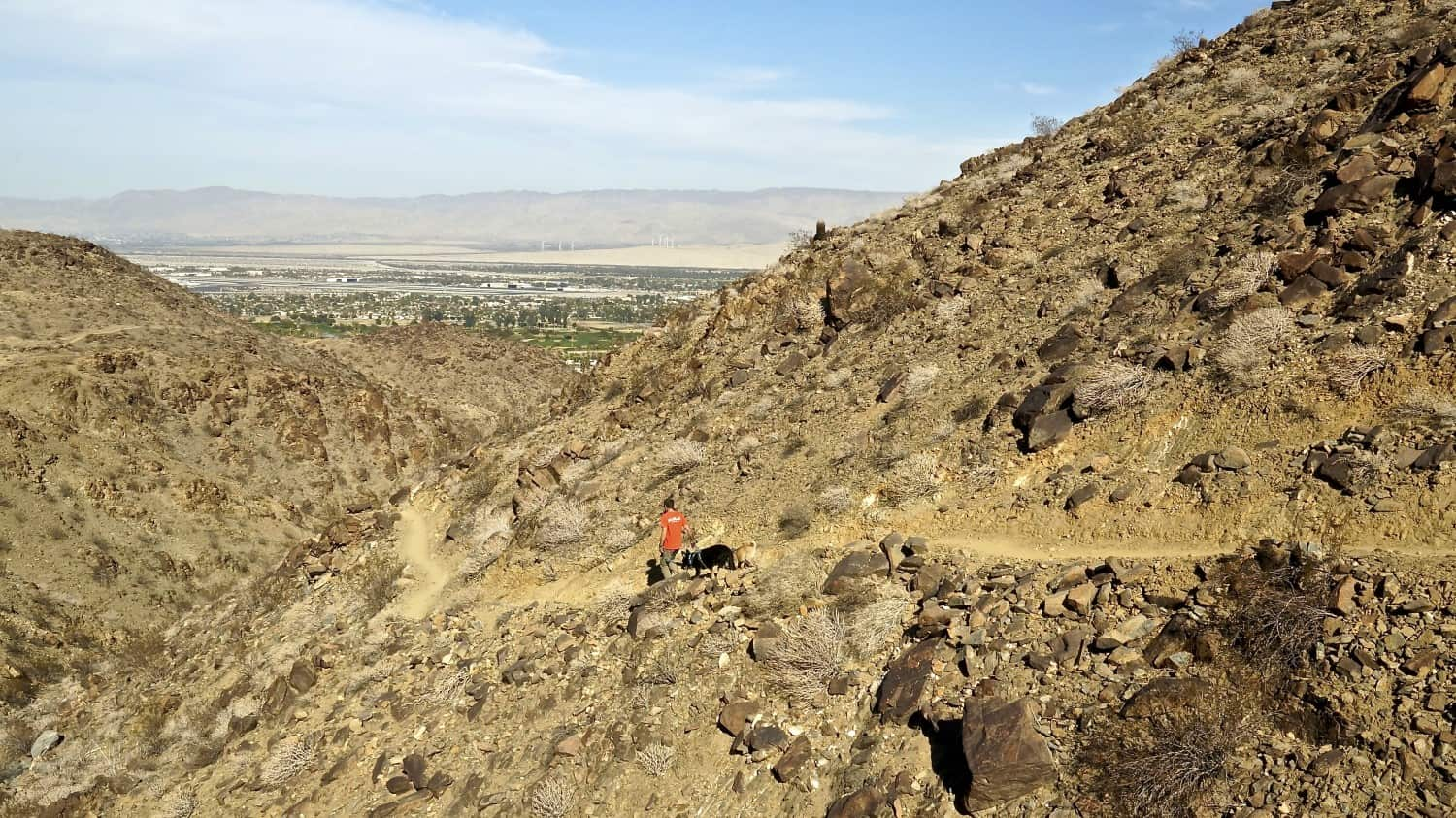 Man and dogs on the pet-friendly Araby Trail in Palm Springs, CA