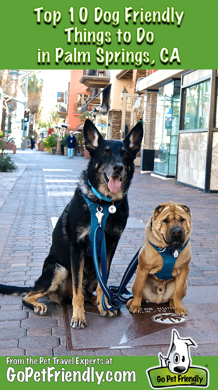 Top 10 Dog Friendly Things to Do in Palm Springs, CA
