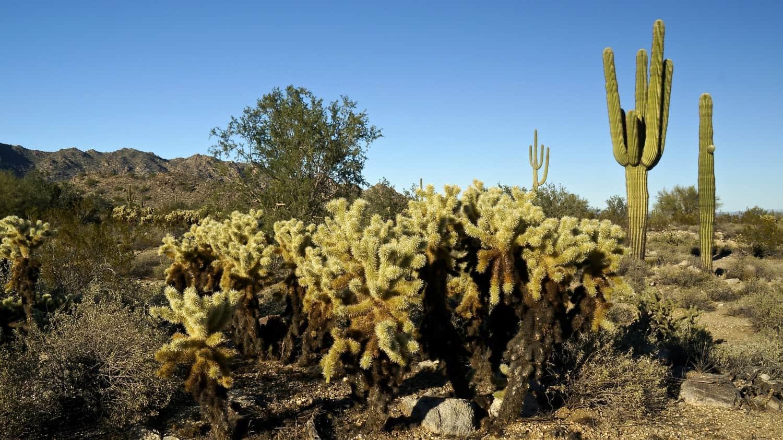 McDowell Mountain Regional Park - Phoenix, AZ