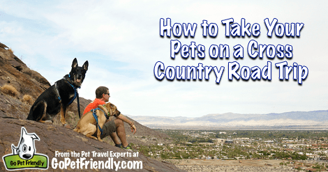 How to Take Your Pets on a Cross Country Road Trip from the Pet Travel Experts at GoPetFriendly.com