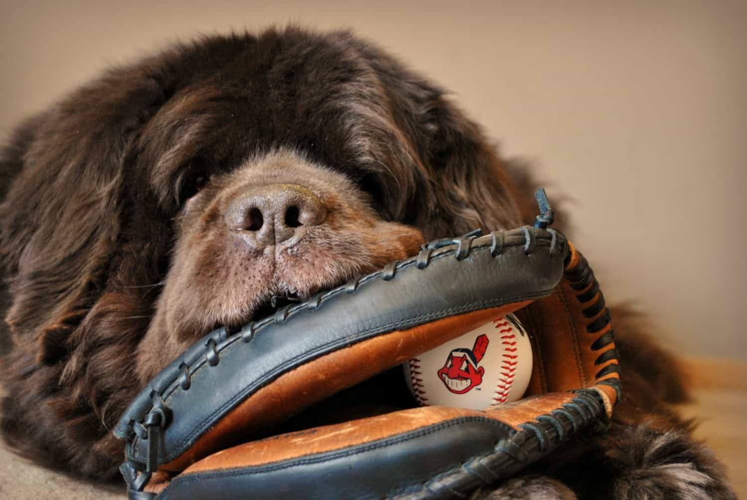 Dog Friendly Baseball Games - 2018 Schedule | GoPetFriendly.com