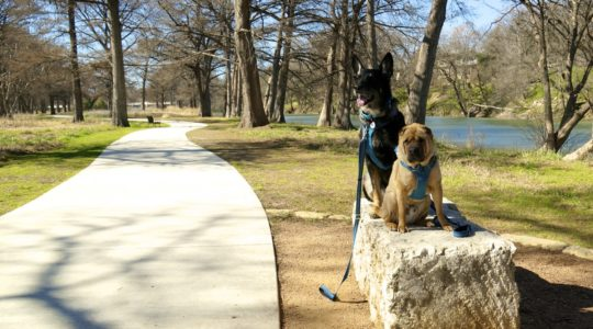 Dog Friendly River Trail in Kerrville, T