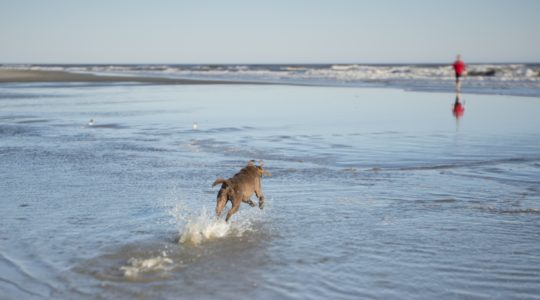 Dog on Beach - Charleston, SC