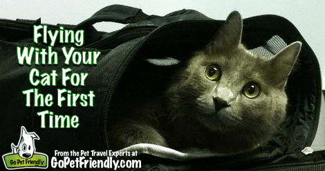 Flying With Your Cat For the First Time from the Pet Travel Experts at GoPetFriendly.com