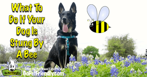 What to Do If Your Pet Gets Stung By A Bee
