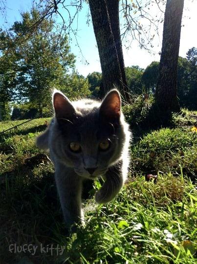 Yoda the Cat - Photo Copyright FluffyKitty.com