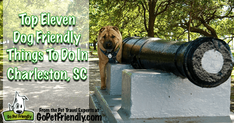Top Eleven Pet Friendly Things To Do in Charleston