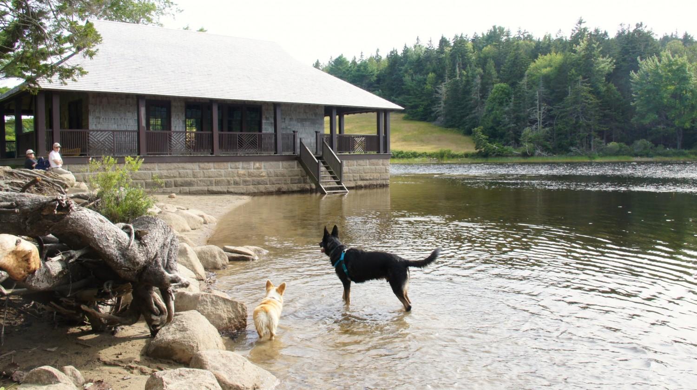 Splashing in the Pond at the Secret Off-leash Area near Acadia National Park, Bar Harbor, ME