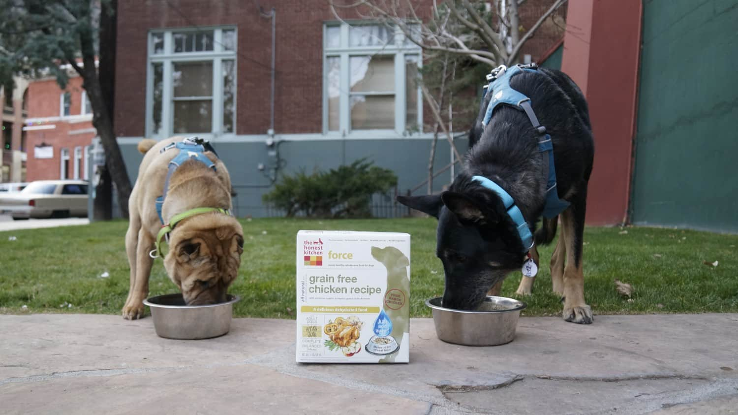 Ty and Buster from GoPetFriendly.com eating dehydrated dog food from The Honest Kitchen