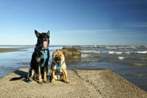 Buster and Ty at East Beach Park - Galveston, TX