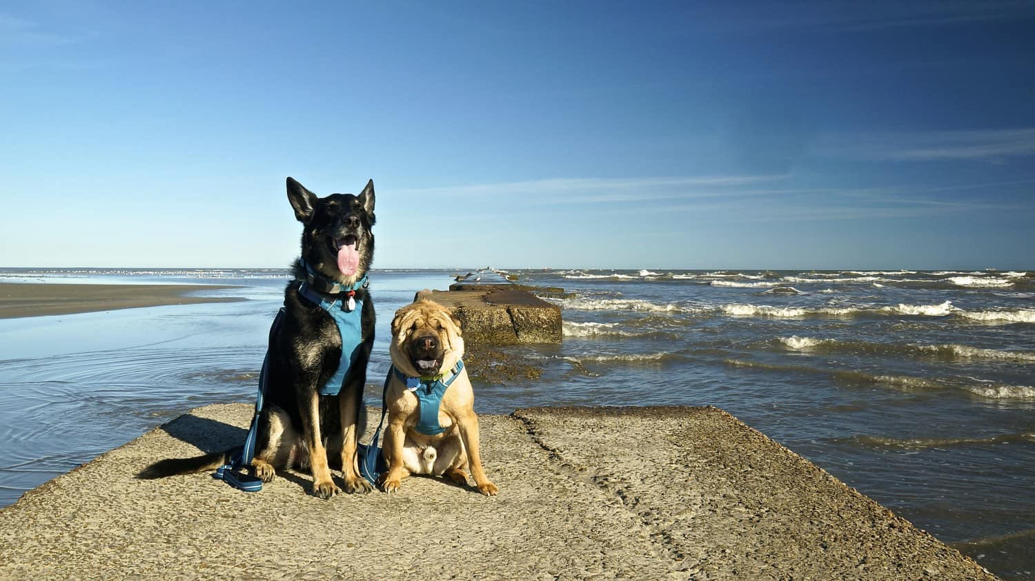 Dog Friendly Beach Getaway in Galveston, Texas