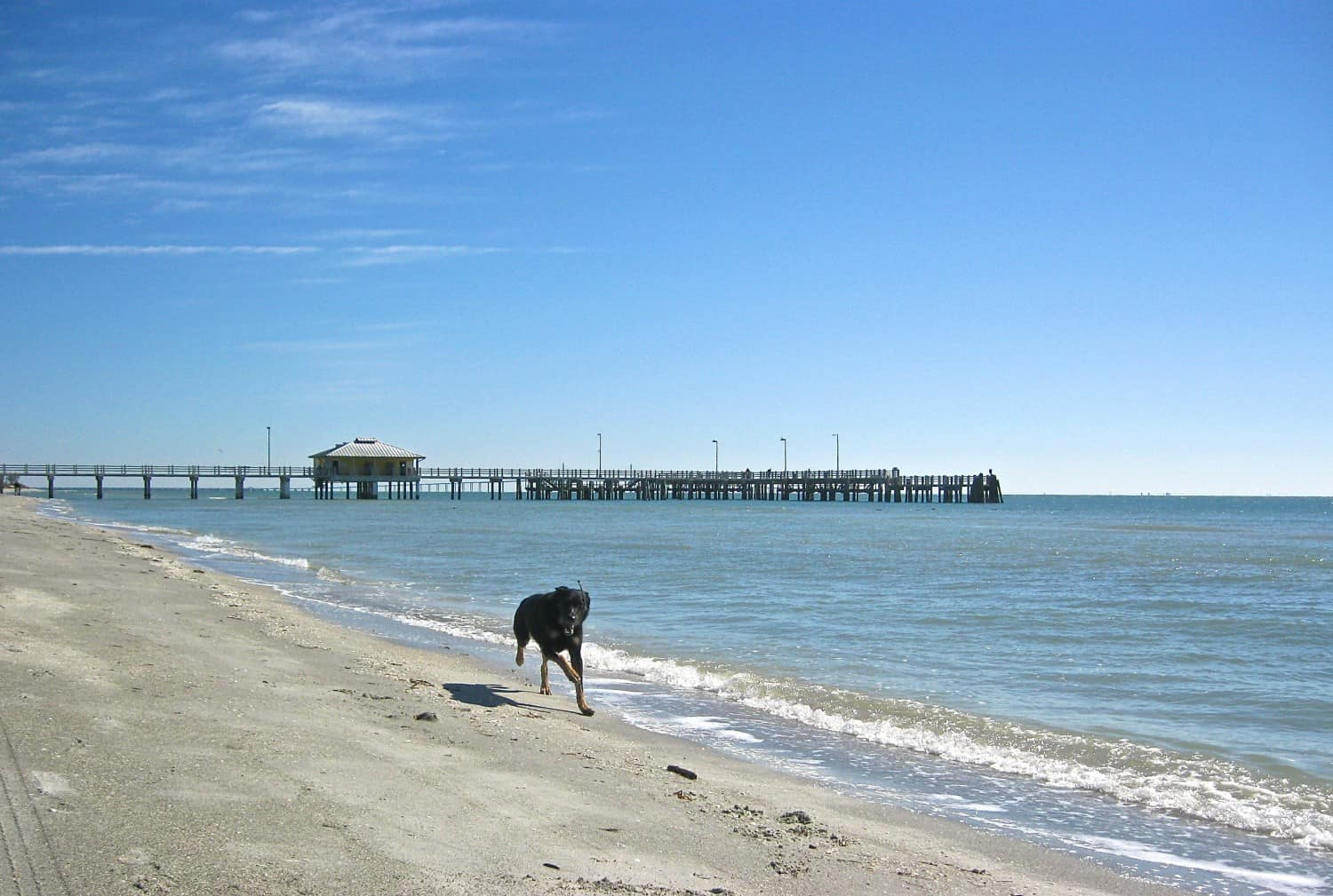 Buster on the Dog Beach - Fort De Soto, FL