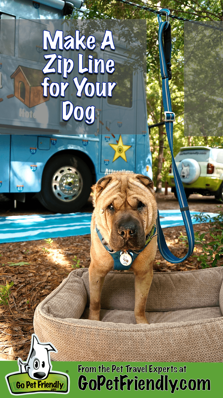 Ty the Shar-pei from GoPetFriendly.com on a zip line in a campsite
