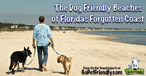 The Dog Friendly Beaches of Florida's Forgotten Coast