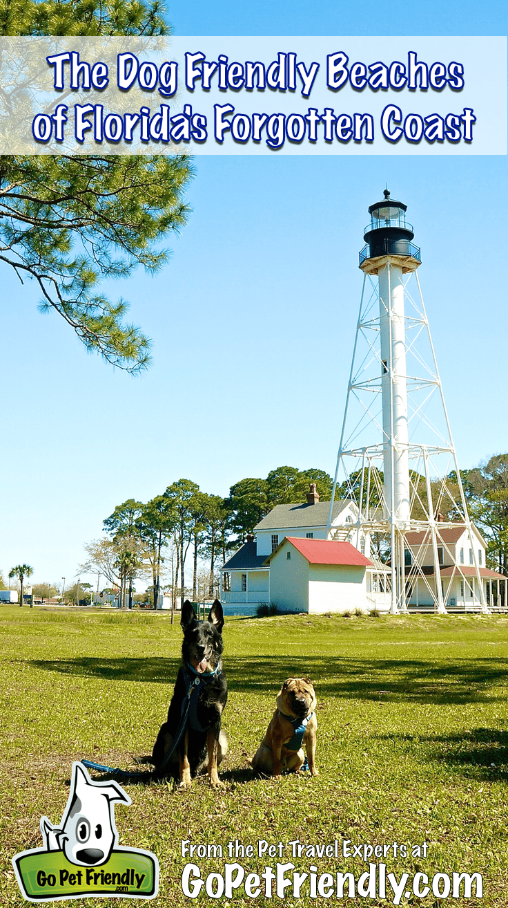 The Dog Friendly Beaches of Florida's Forgotten Coast from GoPetFriendly.com