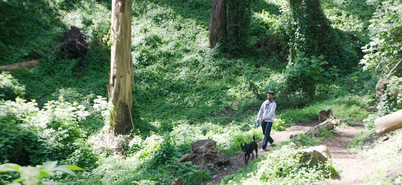 Dog Friendly Hiking in San Francisco, CA