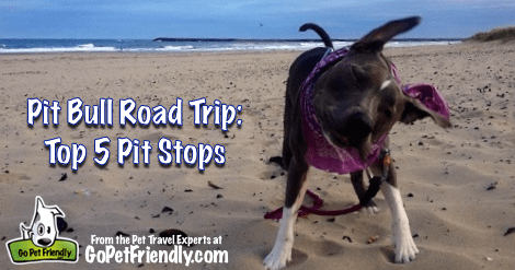 Pit Bull Road Trip from GoPetFriendly.com