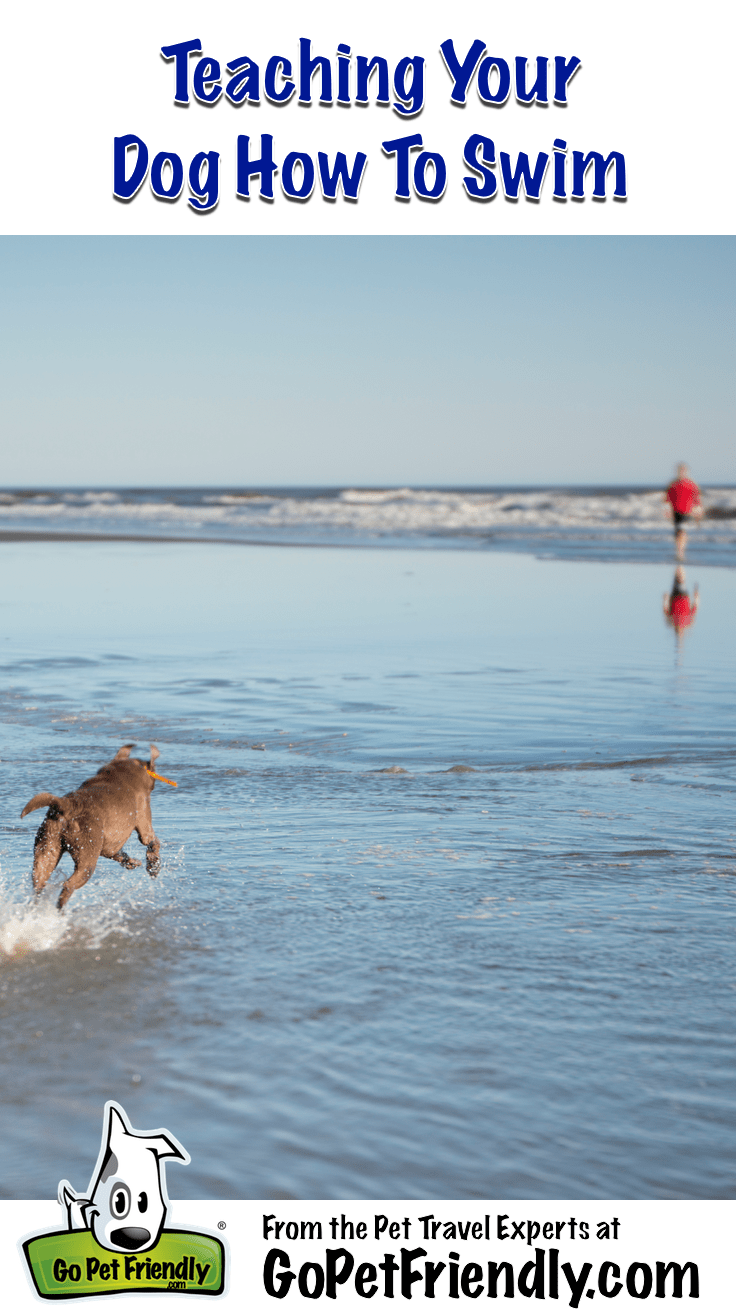 Teaching Your Dog How To Swim from the Pet Travel Experts at GoPetFriendly.com