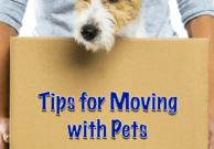 Tips for Moving with Pets from the Pet Travel Experts at GoPetFriendly.com