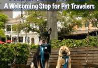 Beaufort, South Carolina: A Welcoming Stop for Pet Travelers - From the Pet Travel Experts at GoPetFriendly.com