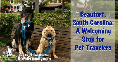 Beaufort, South Carolina - A Welcoming Spot for Pet Travelers