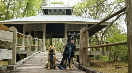 Stephen Foster State Park - White Springs, FL