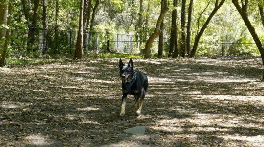Frederica Park Dog Run - St. Simons Island, GA