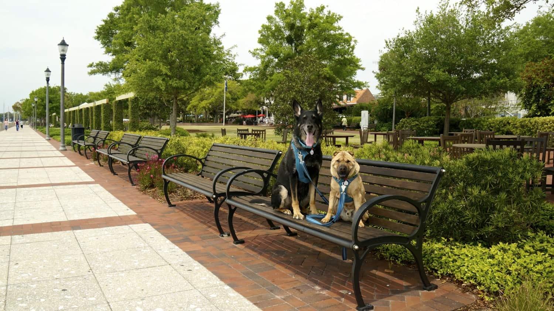 Pet Friendly Beaufort, SC