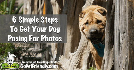 Six Simple Steps To Get Your Dogs Posing For Photos from the Pet Travel Experts at GoPetFriendly.com