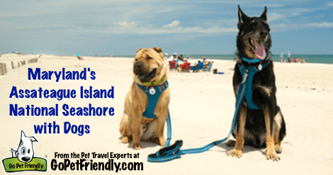Dog Friendly Beach at Assateague Island National Seashore in Maryland