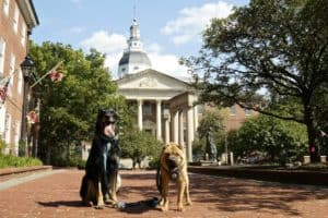 Things to Consider When Visiting Annapolis With Dogs