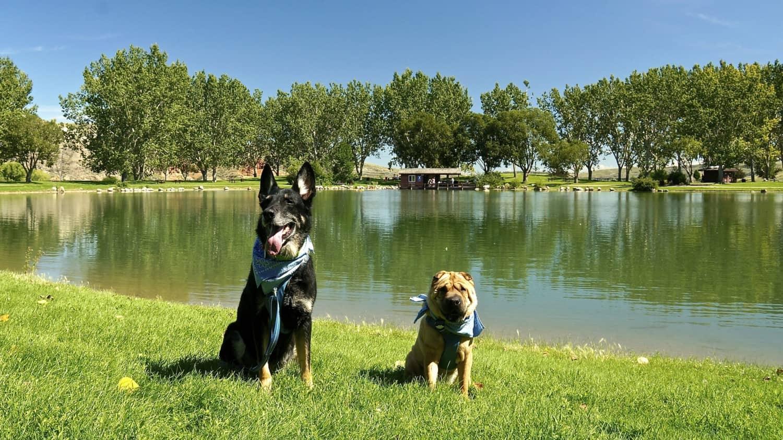 A Dog Friendly Visit to Medicine Hat, AB | GoPetFriendly.com
