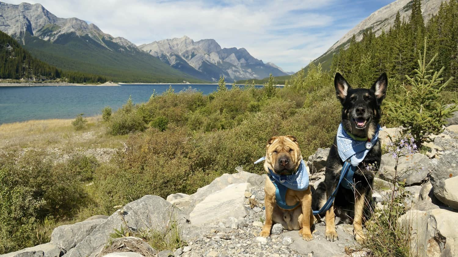 Visiting Dog Friendly Banff, AB | GoPetFriendly.com