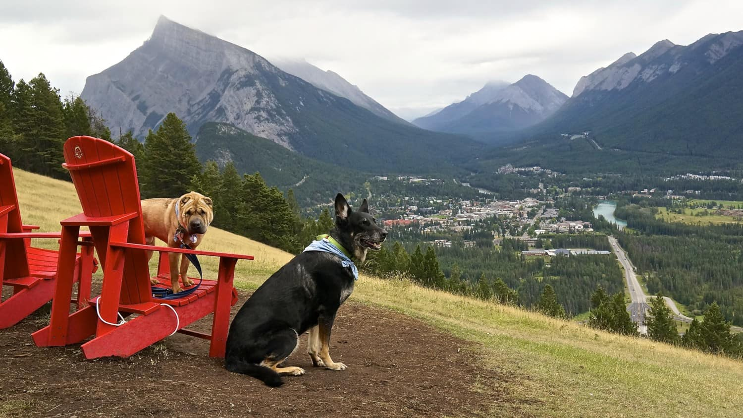 Dog Friendly Things To Do In Banff: Part 2