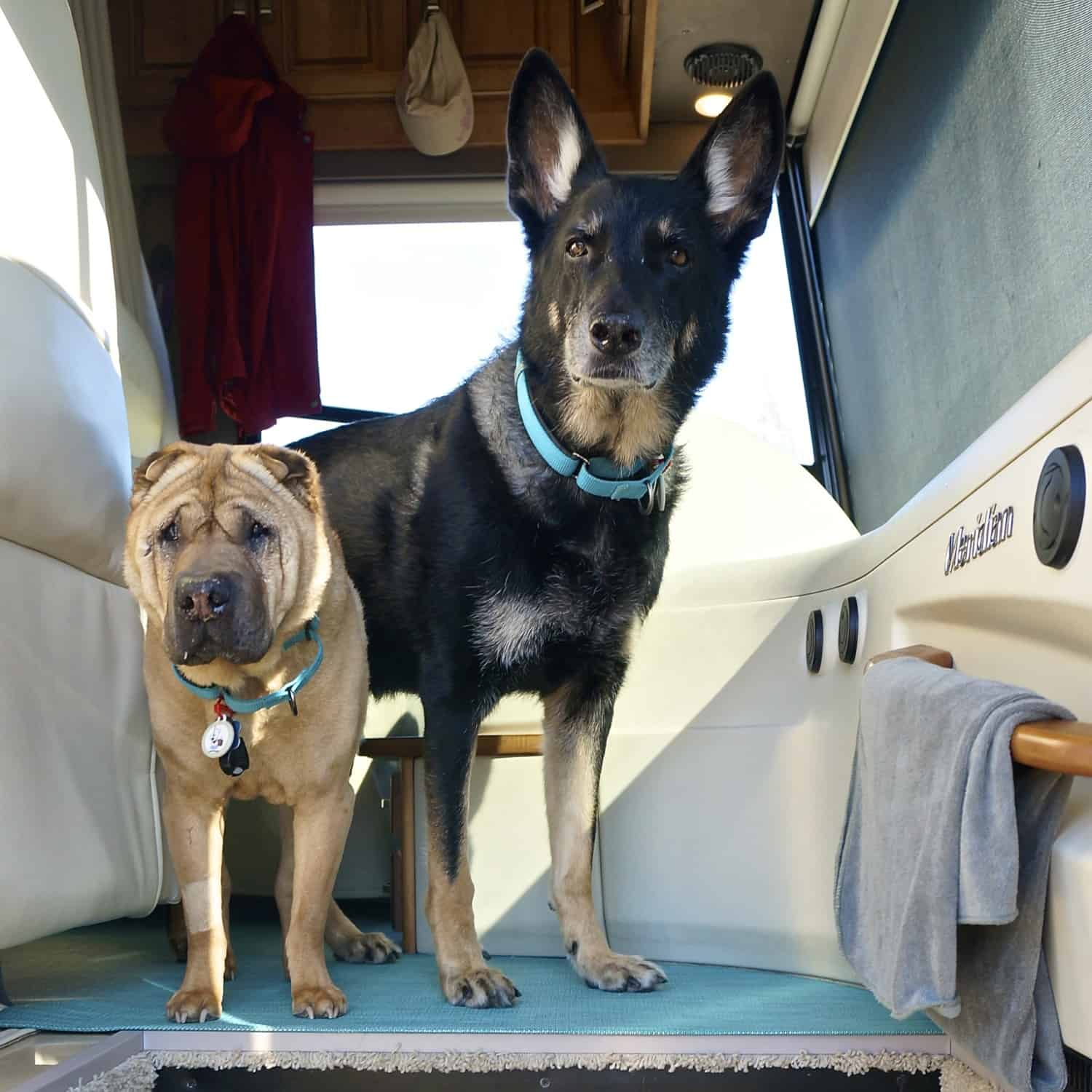 That's How We Roll: Managing Wet Dogs in an RV | GoPetFriendly.com