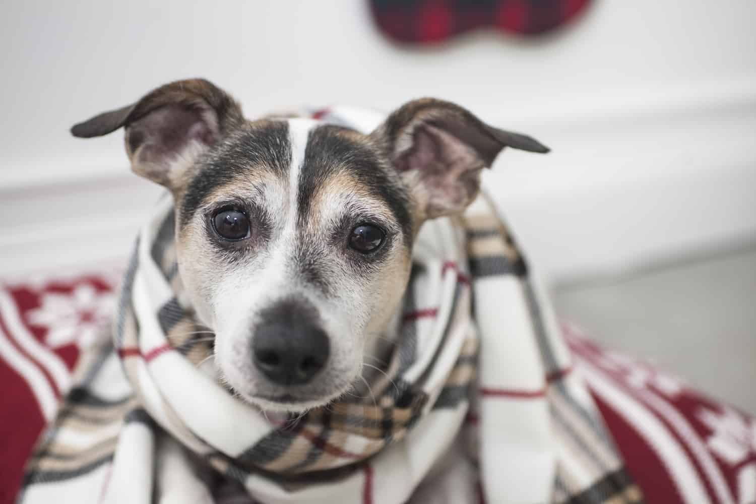 How To Avoid The 5 Most Common Holiday Pet Travel Mistakes