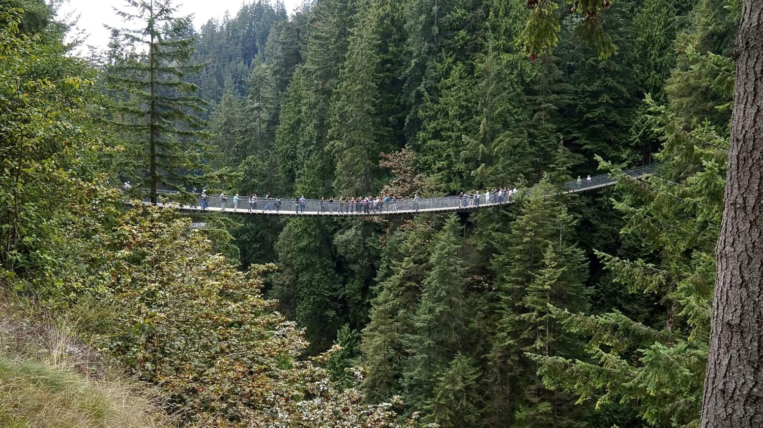 View of the dog friendly Capilano Suspension Bridge in Vancouver, BC