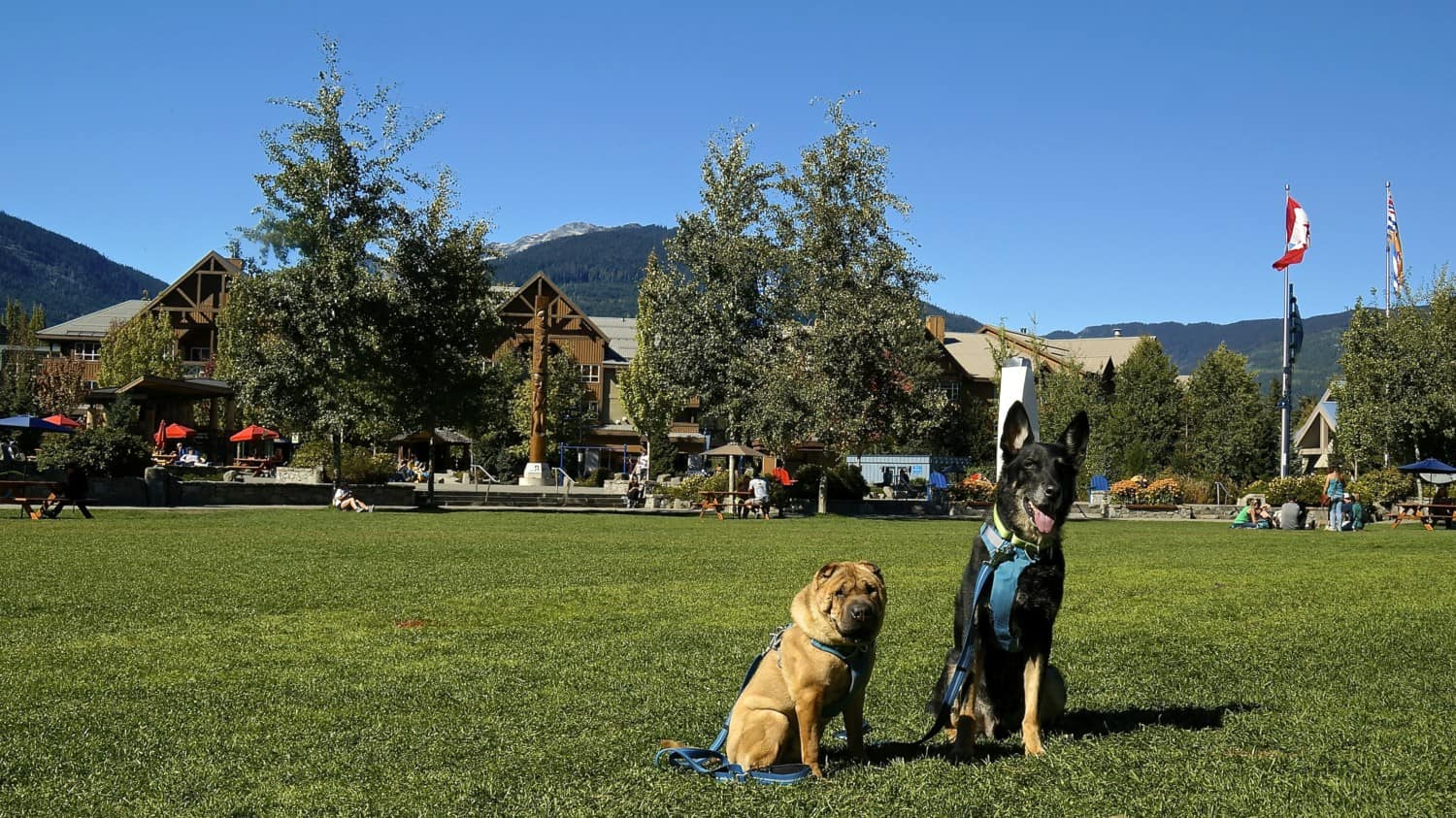 Dog Friendly Whistler, BC | GoPetFriendly.com