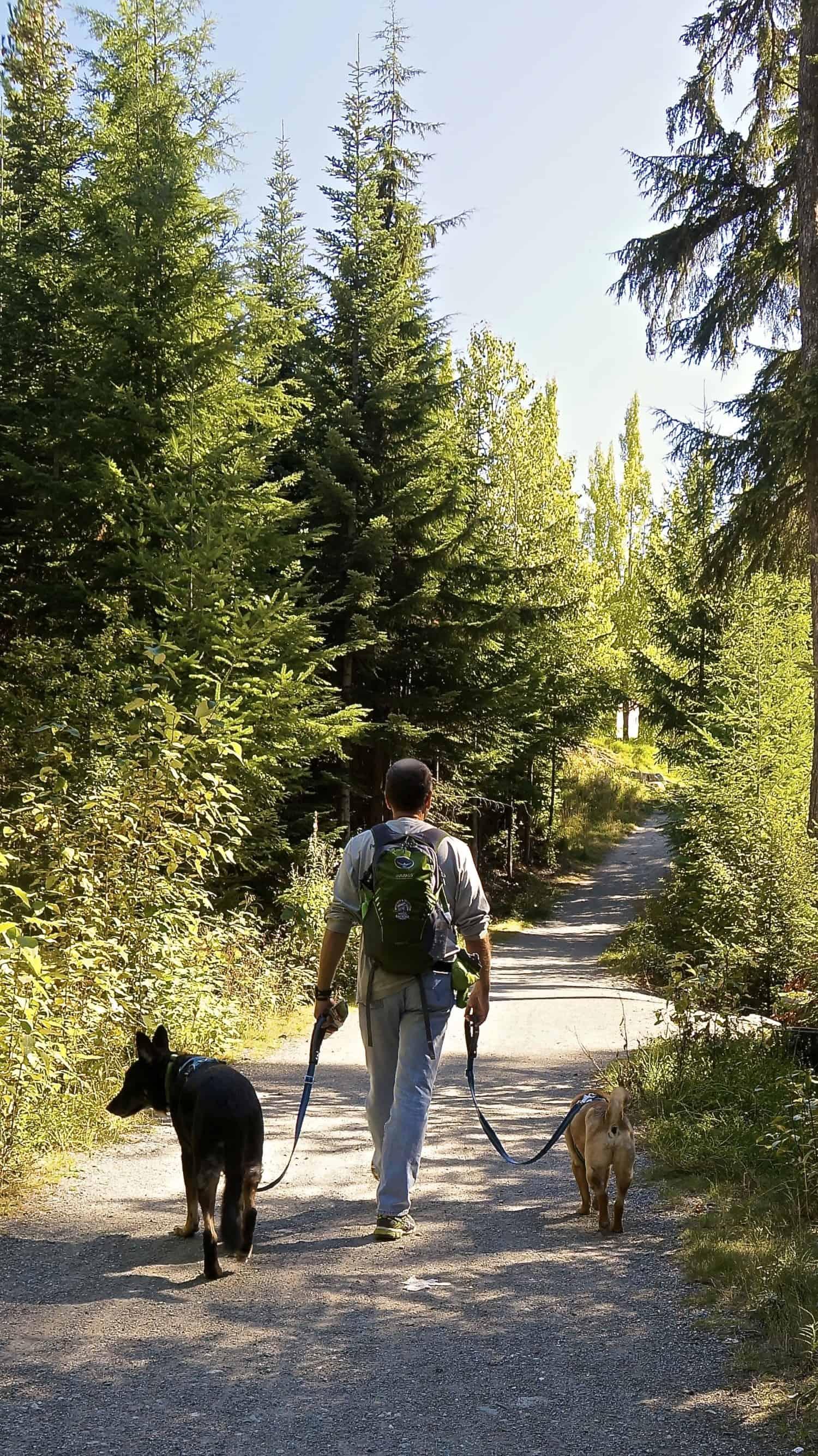 Dog Friendly Whistler, BC | GoPetFriendly.com