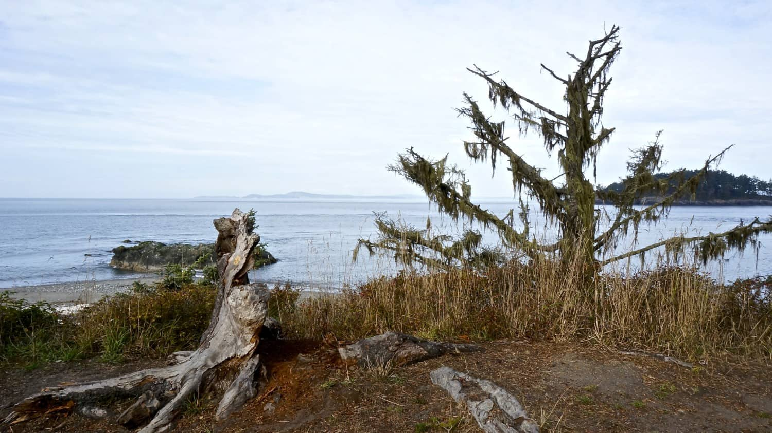 Exploring Whidbey Island with Dogs | GoPetFriendly.com
